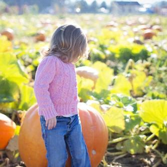 Skagit County Pumpkin Patches
