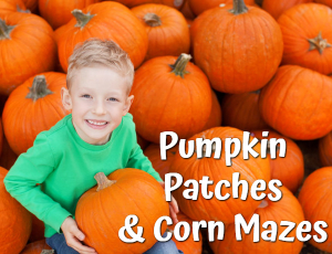 Skagit County Pumpkin Patches & Corn Mazes